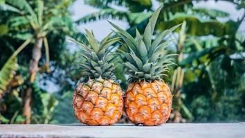 パイナップル栽培